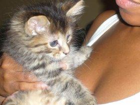 my new kitten kali 0131032427496..jpg