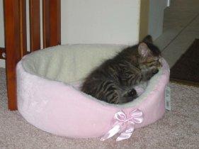 my new kitten kali 028579204854..jpg